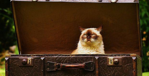 Stressfreier Umzug mit Katzen