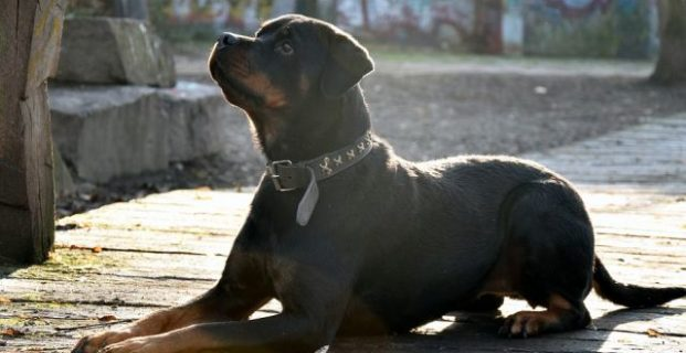Grundgehorsam beim Hund: Platz