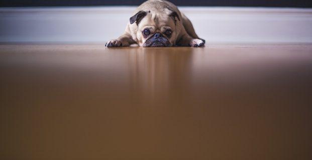 Grundgehorsam beim Hund: Bleib