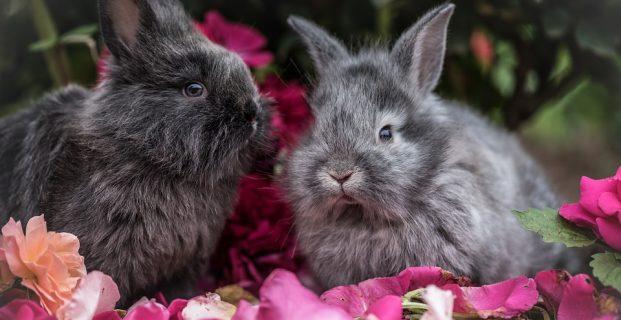 Nie alleine – Kaninchen