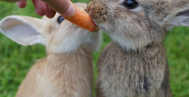 Hilfe, meine Kaninchen knabbert alles an!
