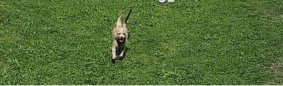 Milo – kleiner Hund im großen Glück
