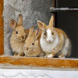 Ein neuer Bewohner im Kaninchenstall