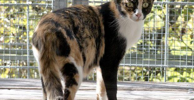Unglaublich aber wahr – Katze Julchen sucht sich Zuhause selbst