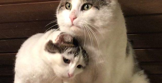 Kasper & Trixi