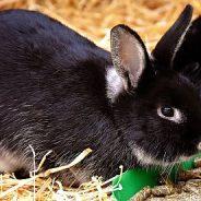 Trockenfutter für Kaninchen