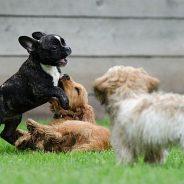 Die Prägephase beim Hund