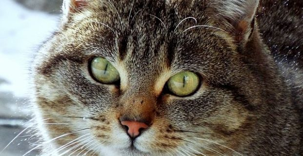 Katze von Sophie