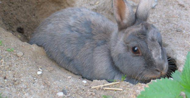 Buddelkiste für Kaninchen
