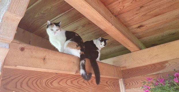 Wie sehen glückliche Katzen aus?