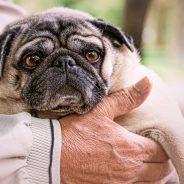 Der letze Weg des Hundes – in Begleitung seiner Menschen