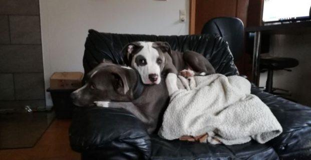 Rocco & seine neue Freundin