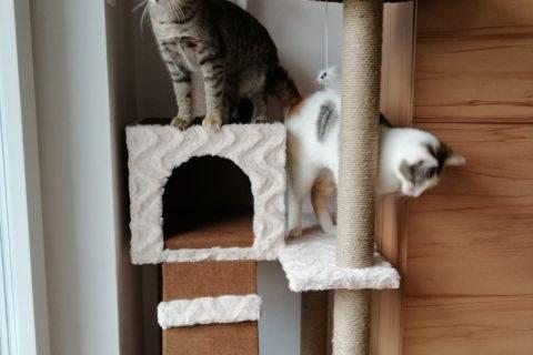 Maya & Minka