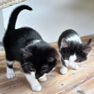 Lili und Franzi