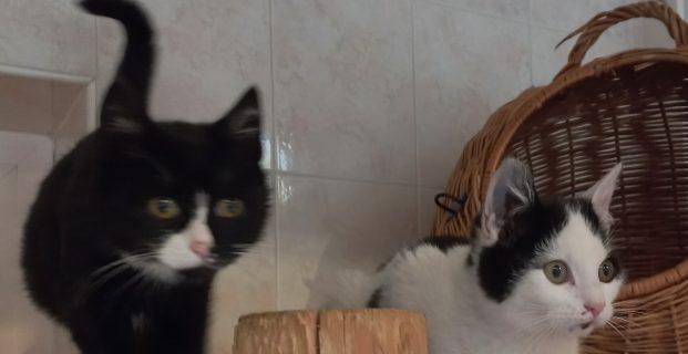 Maxi und Mauzi