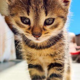 Katze in Weitental vermisst